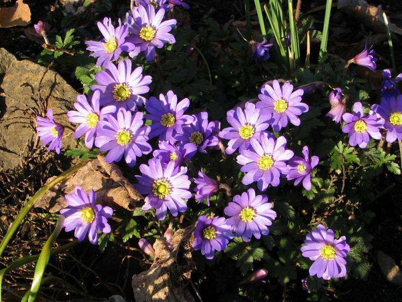 Flowers672.jpg
