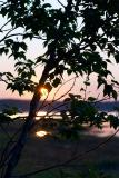 sunrise. through the trees