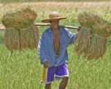carrying rice bundles in LA Lakers shorts