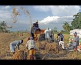harvesting with machine