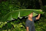 Banana Leaf Unbrella.jpg