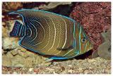 Bright colored fish