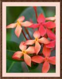 Delicate-Redish-Flowers-FRM.jpg