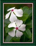 Twin-White-Flowers-FRM.jpg