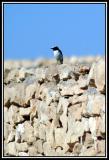 àéìú Eilat