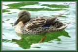 Ma Duck - July 28-04