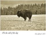The Buffalo - March 05-05