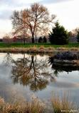 evening_reflection.jpg