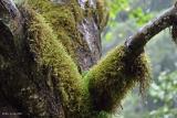 mossy_tree.jpg