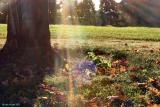 sunbeams_and_spiderwebs.jpg