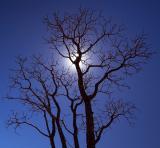 dead-tree2.jpg