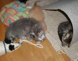 Viki teasing sleepy Hulda