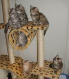 All posing on the cat tree