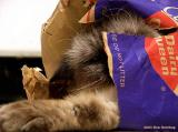 Bag-himmy-02.jpg