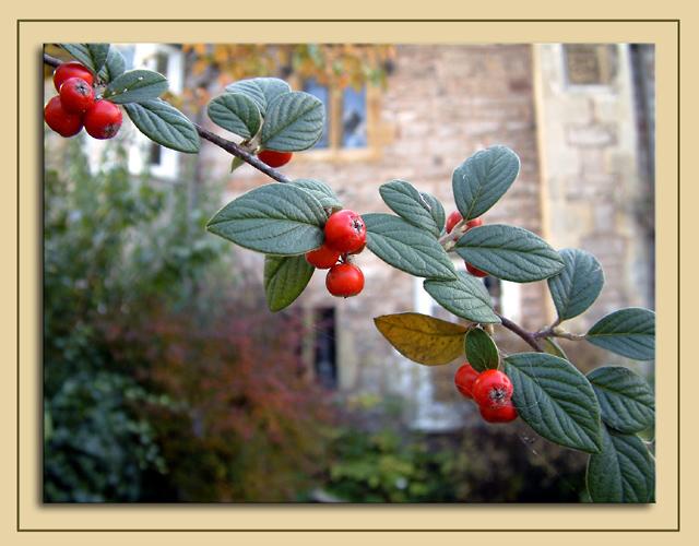 Berries, Wells
