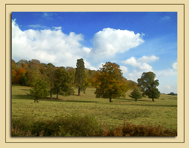 Trees and field, Wells