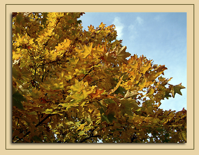 More leaves! Wells