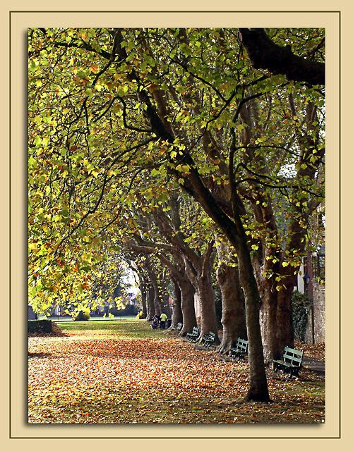 Line of trees, Wells