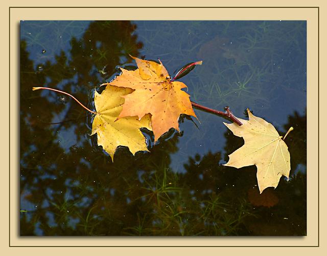 Driftin leaves, Wells