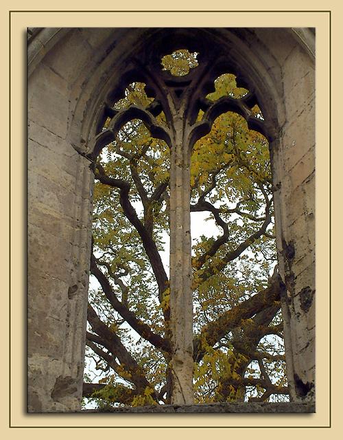 Tree through ruined window, Wells