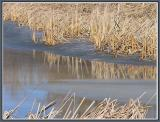 March 7 - Spring Thaw