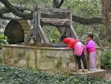 01 08 05 Alamo, curiosity at the well.