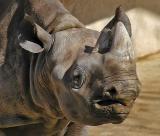 01 08 05 San Antonio Zoo