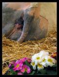 Salon de l'agriculture :  De jolies fleurs devant une peau de vache ..