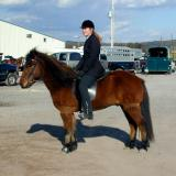 Northeast Gaited Show - Oct. 2003
