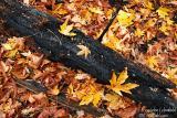 Day 2 - Fallen Leaves Burned Tree