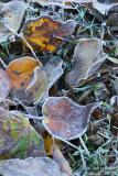 Day 2 - Frozen Leaves