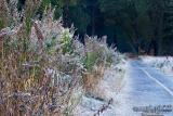 Day 2 - Frozen Walkpath