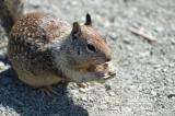 Squirrel near Piedras Blancas