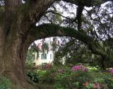 The Wayne Gaupp Oak at Destrehan Plantation