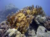 careful fire coral