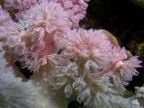 delicate feeding coral
