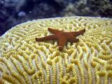 starfish on the brain
