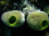 spongy bits