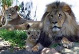 Jambo and Kuchani with family