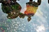 Reflections In Tide Pool