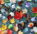 leaves at Lunch.jpg