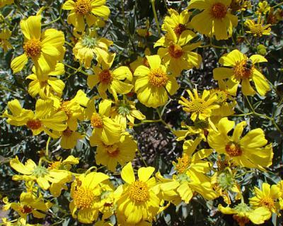 Flora22.jpg