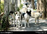 ¥x¤¤¥«¤C¡B¤K´Á«¹º°Ï¬y®öª¯(Part One) / Stray Dogs in the 7th and 8th Development District of Taichung City(Part One)