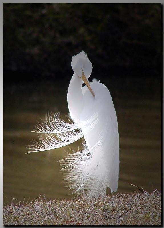 feathersflying