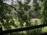 Peek thru Trees - Wales