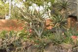 MalaMala garden