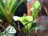 A Frog at London Zoo