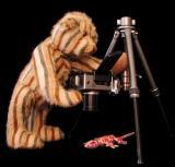 Photo Bear*