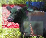 Psychedelic Cow, Gretna, Virginia.jpg