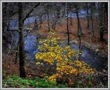 Fall Yellow and Green II